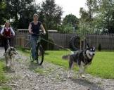 Dogscooter Schwabmünchen