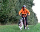 Dogscooter Twistringen