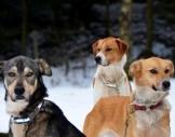 Husky-Trekking Alt Nagelberg