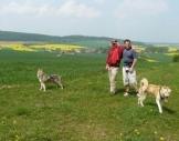 Husky-Trekking Neuhof-Hauswurz