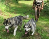 Husky-Trekking Schmallenberg