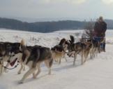 Schlittenhunde-Workshop Diemelsee-Adorf