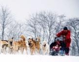 Schlittenhunde-Workshop Neuhof-Hauswurz